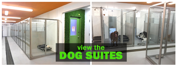 dog suite tour