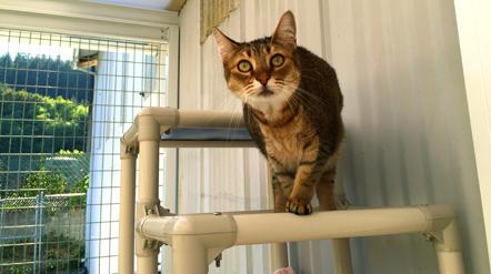 CASA - Camano Animal Shelter Association